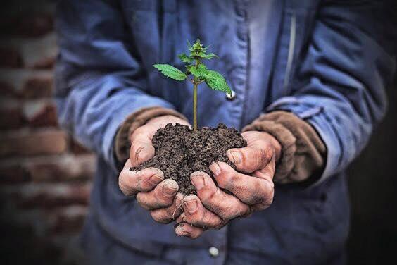 種樹計畫-綻放潔淨呼吸的香氣!